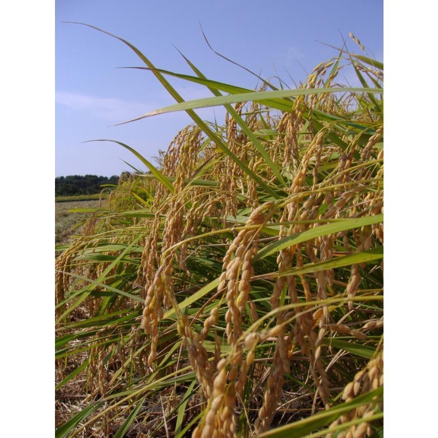 特別栽培米コシヒカリ(玄米)10Kg【新潟県胎内産】 nousan 02