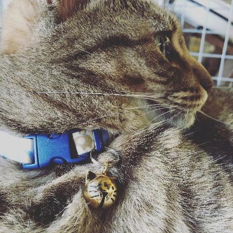ネコ ねこ キャット 首輪 チャーム 鈴 すず 猫顔 シルバー ゴールド  (ねこ鈴)|nyanpakusengen|03