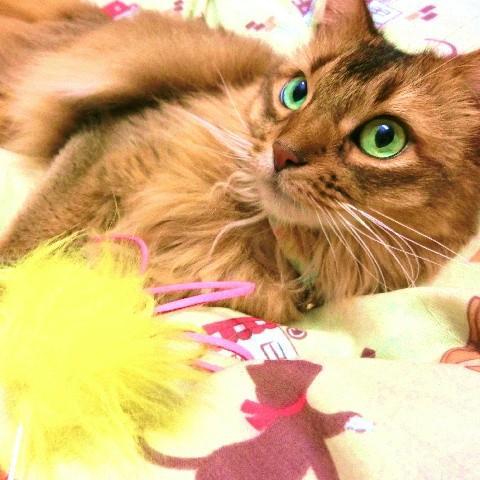 猫 ネコ ねこ じゃらし ジャラシ おもちゃ 付け替え 棒なし 手作り 合皮 フェイクファー ビーズ (付替じゃらし黄ぼうず)(1175)|nyanpakusengen|07