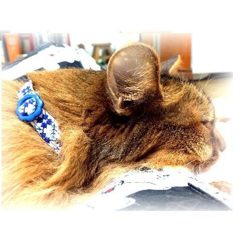 猫 ネコ ねこ キャット 首輪 安全バックル 軽い 負担少ない 手作り ソフト (猫用首輪 なでしこ)|nyanpakusengen|04