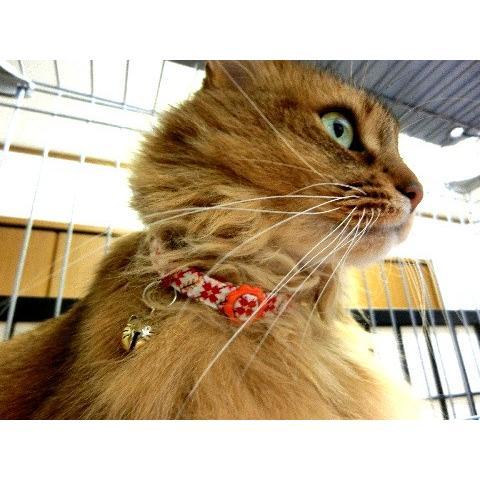 猫 ネコ ねこ キャット 首輪 安全バックル 軽い 負担少ない 手作り ソフト (猫用首輪 なでしこ)|nyanpakusengen|06