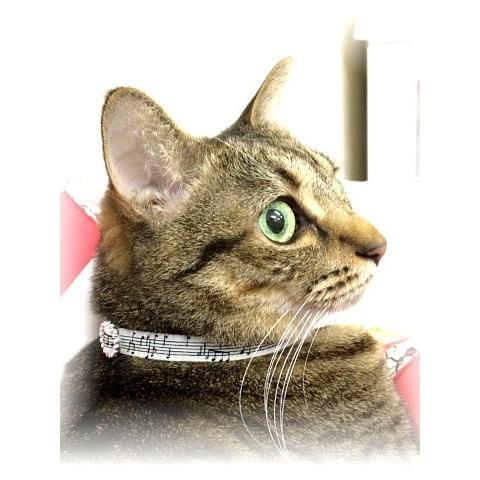 猫 ネコ ねこ キャット 首輪 安全バックル 軽い 負担少ない 手作り ソフト (猫用首輪 メロディ)(515) nyanpakusengen 04