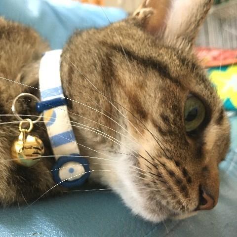 猫 ネコ ねこ キャット 首輪 安全バックル 軽い 負担少ない 手作り ソフト (猫用首輪 サーカス) nyanpakusengen 04