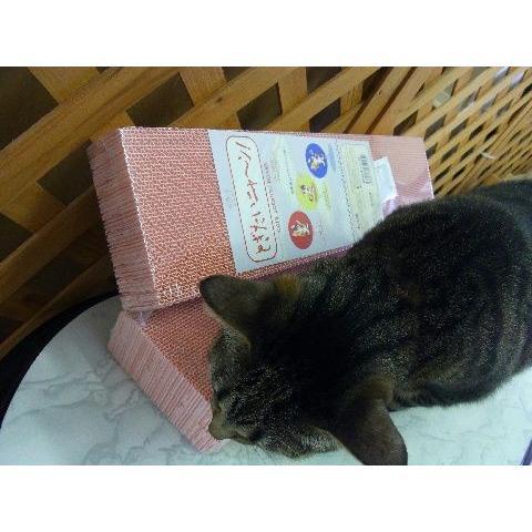 猫 ネコ ねこ キャット 爪とぎ つめ 砥ぎ 色付き とぎたいにゃん レフィル 詰め替え (とぎたいニャーン! 詰替2本セット) nyanpakusengen 05