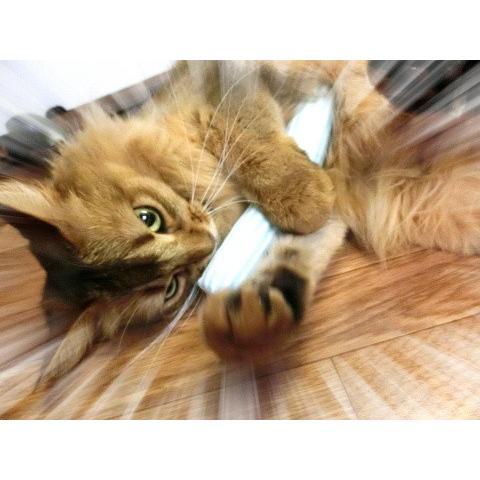 猫 ネコ ねこ キッカー おもちゃ マタタビ またたび 国産 天然 けりぐるみ ケリケリ ミニ (水玉ミニキッカー)(723) nyanpakusengen 05