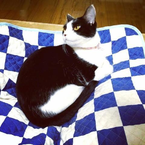 猫 ネコ ねこ キャット マット ベッド キルティング 手作り (正方形クッションマット)|nyanpakusengen|13
