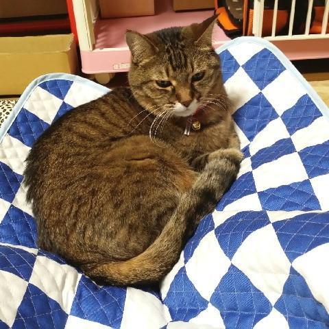 猫 ネコ ねこ キャット マット ベッド キルティング 手作り (正方形クッションマット)|nyanpakusengen|14