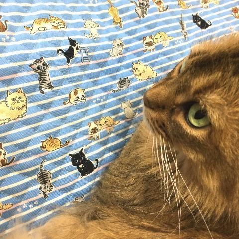 猫 ネコ ねこ キャット マット ベッド キルティング 手作り (正方形クッションマット)|nyanpakusengen|17