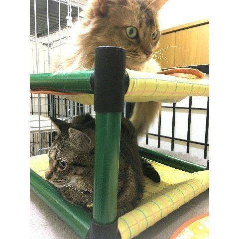 キャットタワー ハンモック 猫 ネコ ねこ 軽量 ニャンモック ベッド 多頭飼い スクエア 正方形 コンパクト 移動簡単 (にゃんぱく2段モック)|nyanpakusengen|04