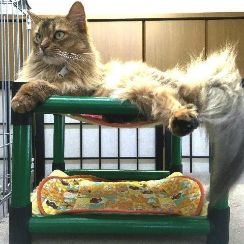 キャットタワー ハンモック 猫 ネコ ねこ 軽量 ニャンモック ベッド 多頭飼い スクエア 正方形 コンパクト 移動簡単 (にゃんぱく2段モック)|nyanpakusengen|07