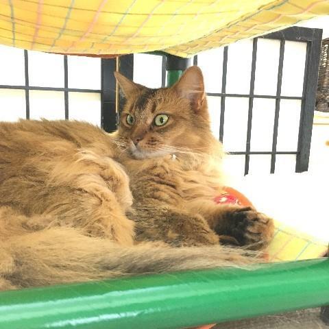 キャットタワー ハンモック 猫 ネコ ねこ 軽量 ニャンモック ベッド 多頭飼い スクエア 正方形 コンパクト 移動簡単 (にゃんぱく2段モック)|nyanpakusengen|08