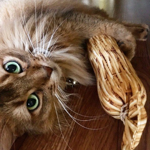 猫 ネコ ねこ キッカー おもちゃ マタタビ またたび 国産 天然 けりぐるみ ケリケリ わら納豆 (わらニャッ豆)(719) nyanpakusengen 09