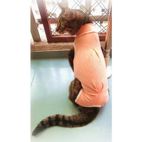猫 キャット ネコ ねこ 術後 服 保護 傷 エリザベスカラー ウェア 術後着 なめ防止 脱毛 傷口 皮膚  伸縮 (ナメにゃいでレオタードオーガニック Lワイド)(419)|nyanpakusengen|07