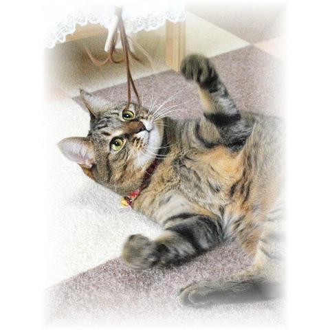 猫 ネコ ねこ じゃらし ジャラシ おもちゃ 付け替え 棒なし 手作り 合皮 ムチ (付替じゃらしペシペシ)|nyanpakusengen|06