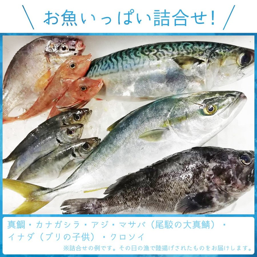 朝獲れ 鮮魚 セット 青森 尾駮漁港 3000円 贈り物 お歳暮 魚詰合せ|obuchisengyodan|02