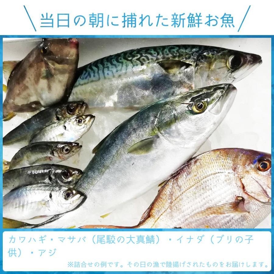 朝獲れ 鮮魚 セット 青森 尾駮漁港 3000円 贈り物 お歳暮 魚詰合せ|obuchisengyodan|03