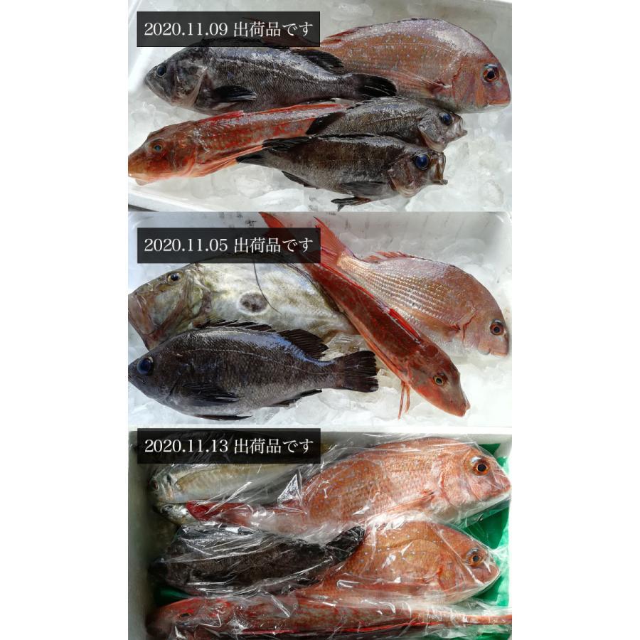 朝獲れ 鮮魚 セット 青森 尾駮漁港 3000円 贈り物 お歳暮 魚詰合せ|obuchisengyodan|06