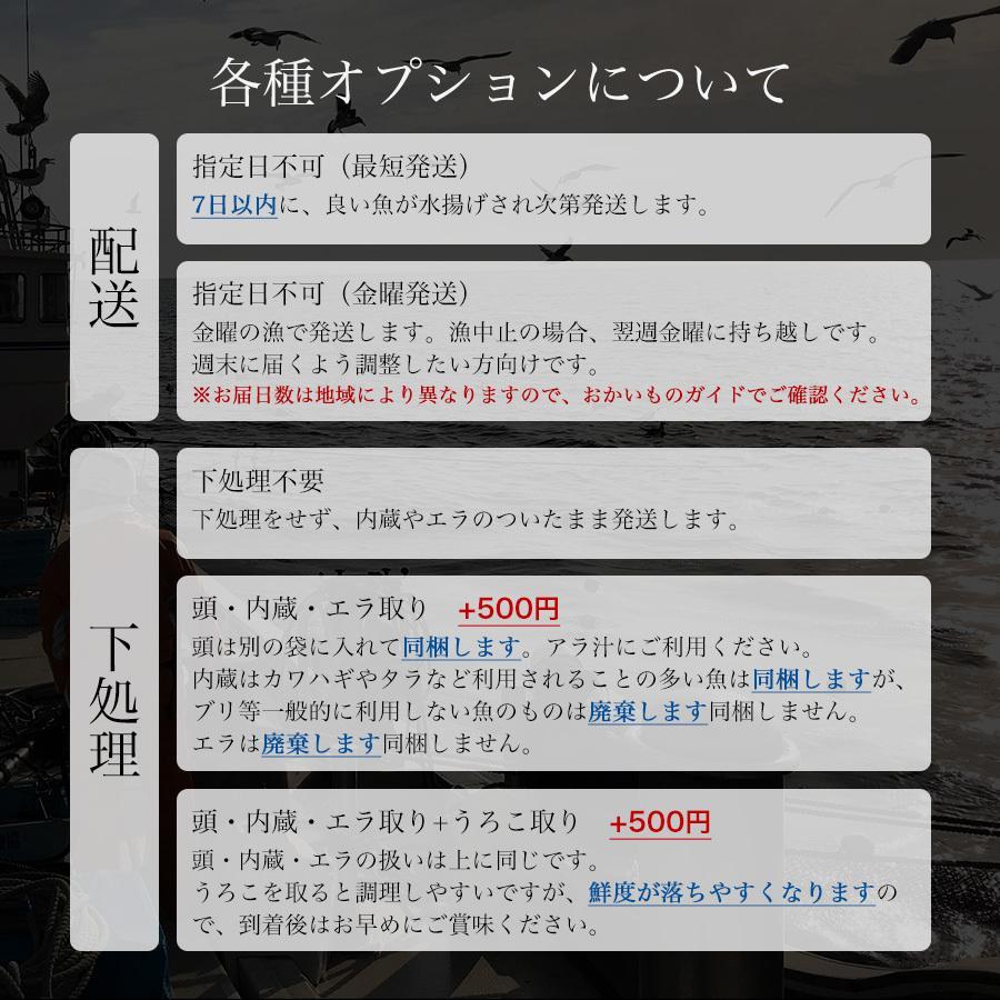 朝獲れ 鮮魚 セット 青森 尾駮漁港 3000円 贈り物 お歳暮 魚詰合せ|obuchisengyodan|07