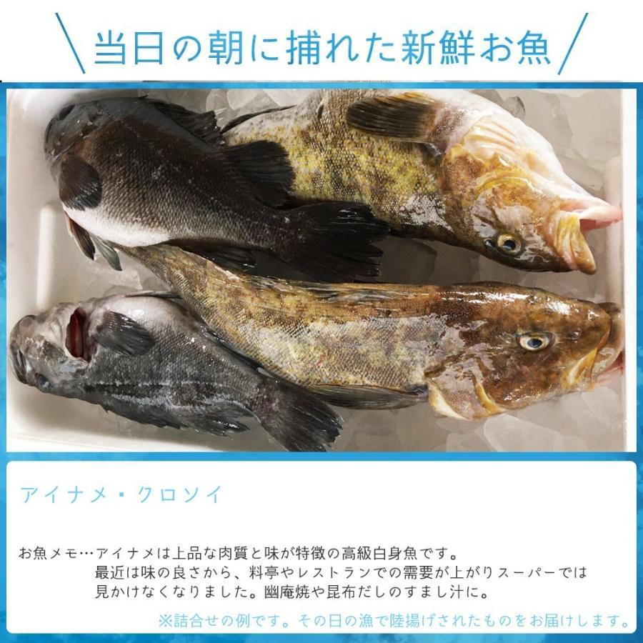 朝獲れ 鮮魚 セット 青森 尾駮漁港 6000円 贈り物 お歳暮 魚詰合せ 送料無料 obuchisengyodan 11