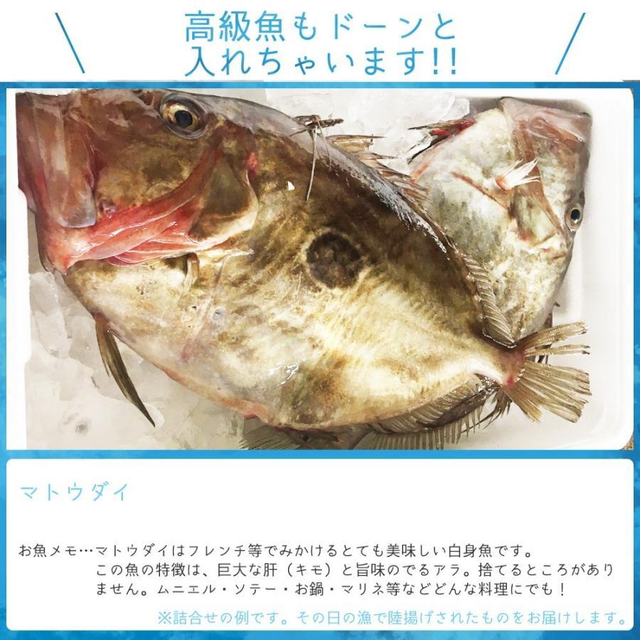 朝獲れ 鮮魚 セット 青森 尾駮漁港 6000円 贈り物 お歳暮 魚詰合せ 送料無料 obuchisengyodan 12