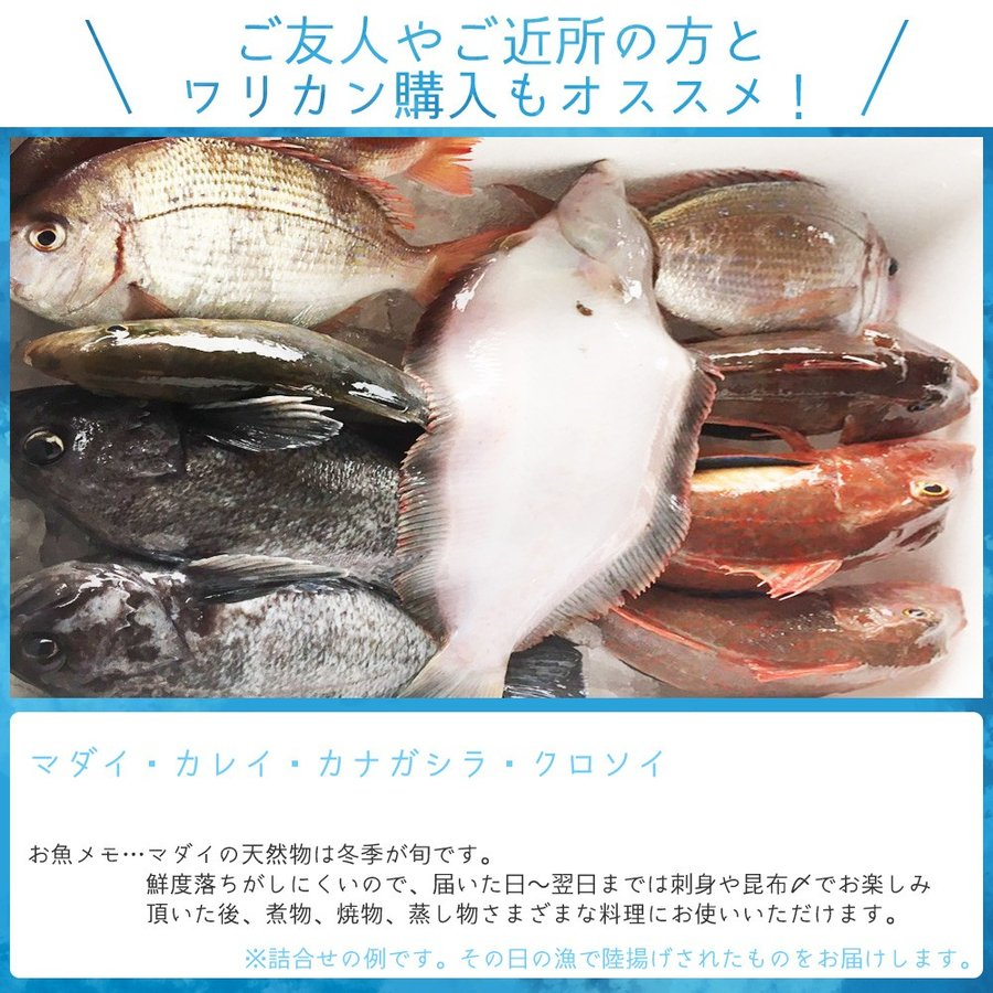 朝獲れ 鮮魚 セット 青森 尾駮漁港 6000円 贈り物 お歳暮 魚詰合せ 送料無料 obuchisengyodan 05