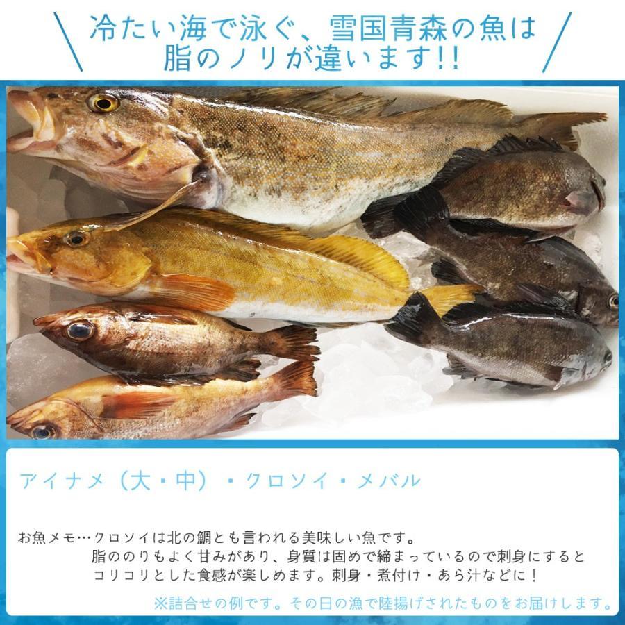 朝獲れ 鮮魚 セット 青森 尾駮漁港 6000円 贈り物 お歳暮 魚詰合せ 送料無料 obuchisengyodan 06
