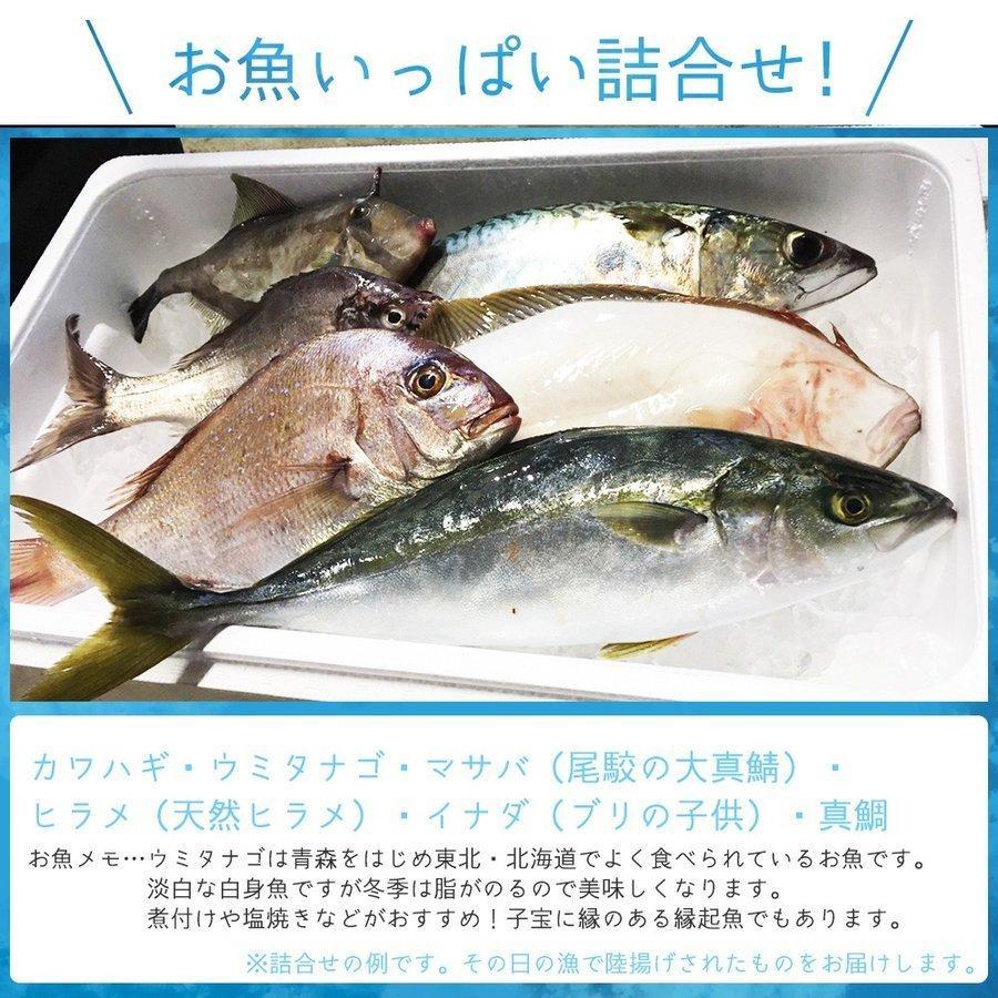 朝獲れ 鮮魚 セット 青森 尾駮漁港 6000円 贈り物 お歳暮 魚詰合せ 送料無料 obuchisengyodan 10