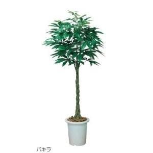 生興 人工樹木 人工樹木 パキラ PAK-18