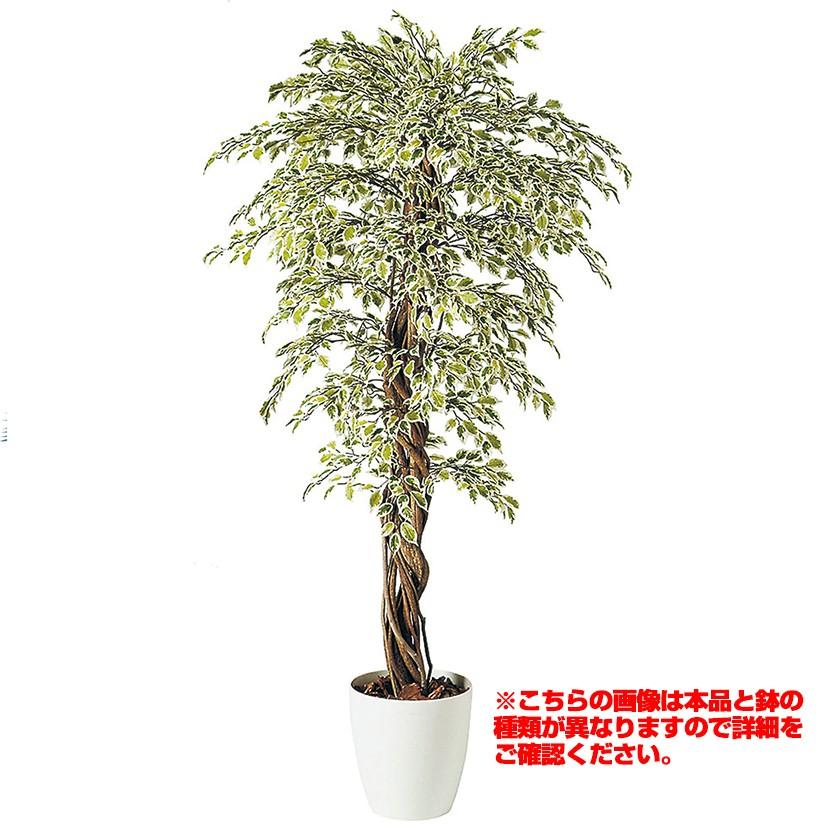 観葉植物 人工 樹木 ベンジャミナスターライトリアナ 高さ1800mm Lサイズ 鉢:懸崖9号