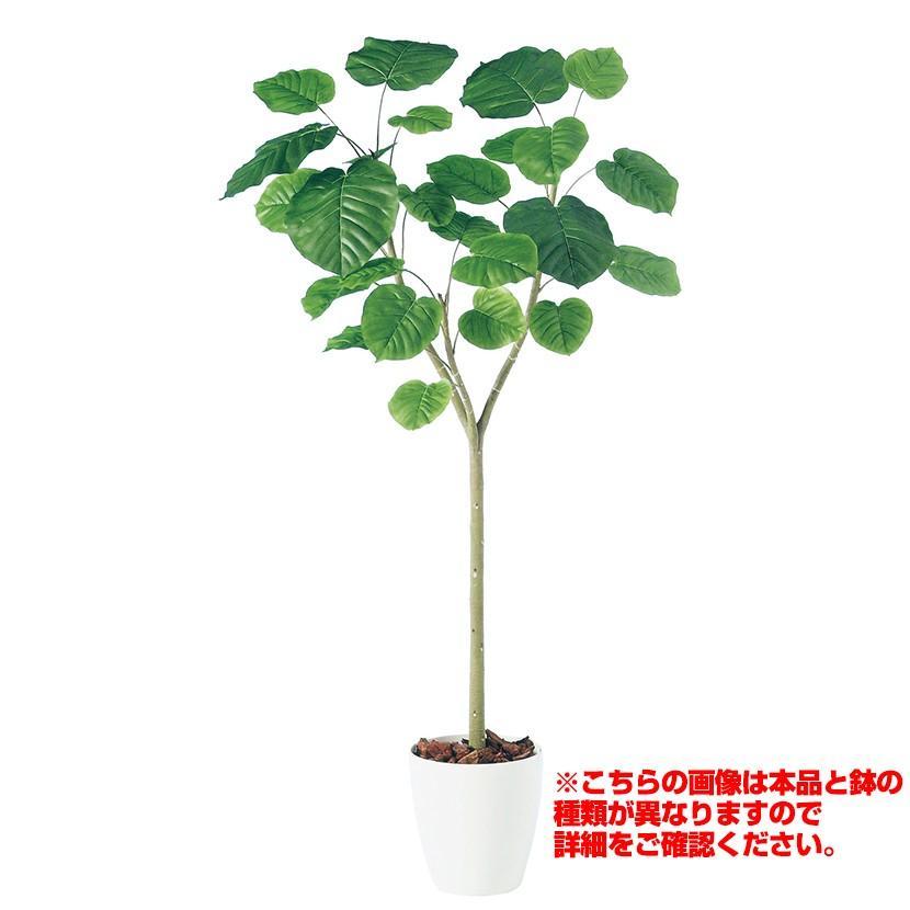 観葉植物 人工 樹木 ウンベラータ 高さ1800mm Lサイズ 鉢:懸崖10号