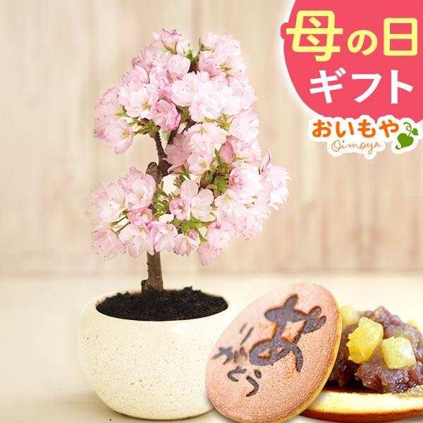 母の日 2021 プレゼント ギフト 花 スイーツ 母の日 花とスイーツ ギフトランキング 盆栽 桜 鉢植え お菓子 和菓子|oimoya