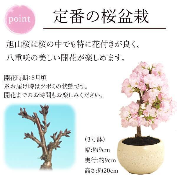 母の日 2021 プレゼント ギフト 花 スイーツ 母の日 花とスイーツ ギフトランキング 盆栽 桜 鉢植え お菓子 和菓子|oimoya|04
