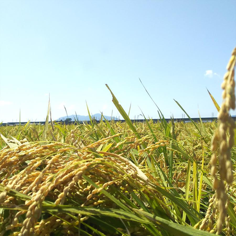新潟県産 コシヒカリ 10kg 令和2年産 お米 白米 5kg×2袋 米蔵保管|oishii-mizu|07