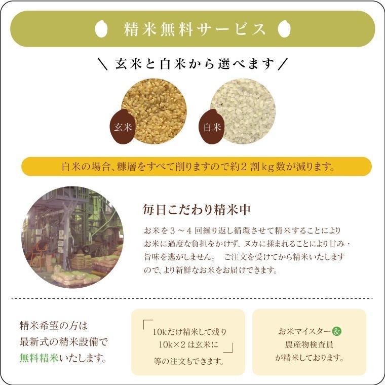 米 お米 新米入り 玄米 ブレンド米 セール 訳あり 無洗米 ふく姫 10kg 送料無料 中粒米|oisiiokomedesu|13