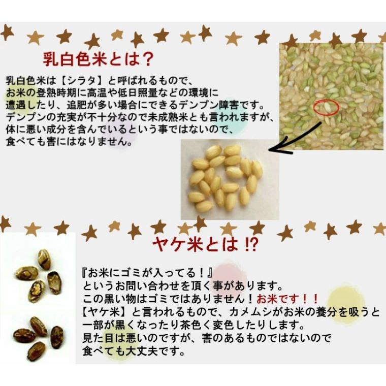 米 お米 新米入り 玄米 ブレンド米 セール 訳あり 無洗米 ふく姫 10kg 送料無料 中粒米|oisiiokomedesu|07