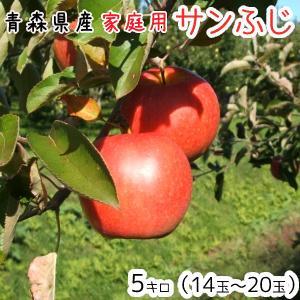 青森りんご 送料無料 家庭用サンふじ5キロ14〜20玉 発送11月20日頃から|oniringo