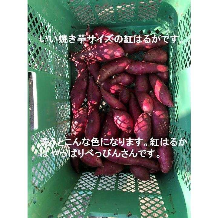【今年最後の10袋限定】この冷凍焼き芋で感動してください。こんな焼き芋食べたことない! あなたを笑顔&元気にする冷凍焼き芋(紅はるか)400g 家庭用  |oomugiya-isakoubou|21