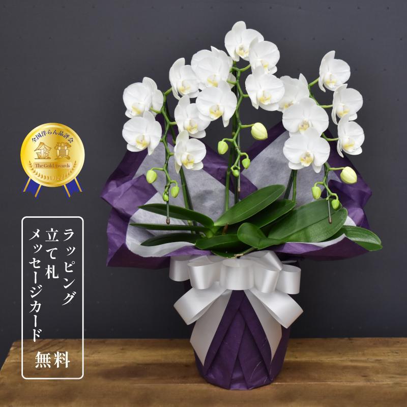 胡蝶蘭スーパーアマビリス3本立ち 法要 お盆 お彼岸 命日 献花|orchid-house