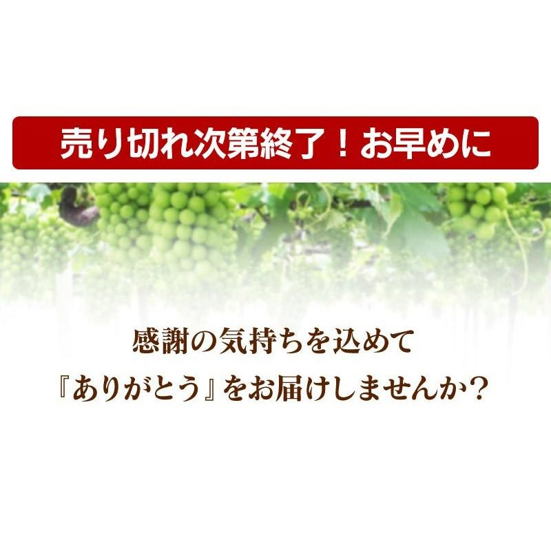 シャインマスカット旬果セット送料無料フルーツギフト果物<お届け:2021年9月14日〜9月19日着>大嶌屋(おおしまや)|oshimaya-1991|02