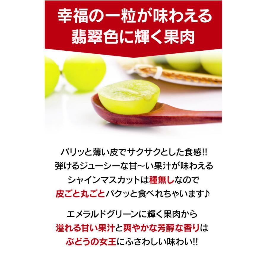 シャインマスカット旬果セット送料無料フルーツギフト果物<お届け:2021年9月14日〜9月19日着>大嶌屋(おおしまや)|oshimaya-1991|08