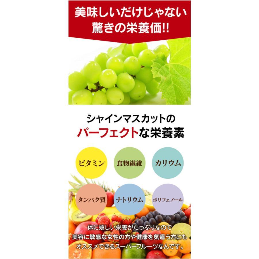 シャインマスカット旬果セット送料無料フルーツギフト果物<お届け:2021年9月14日〜9月19日着>大嶌屋(おおしまや)|oshimaya-1991|09