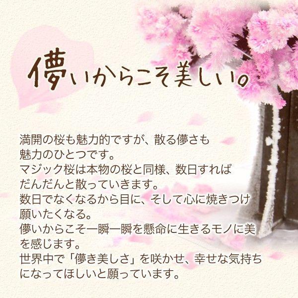 マジック桜 Magic桜 12時間で咲く感動のサクラ おうち花見 室内屋内花見 入学祝 卒業祝 合格祝 母の日 おとぎの国 otogino 05