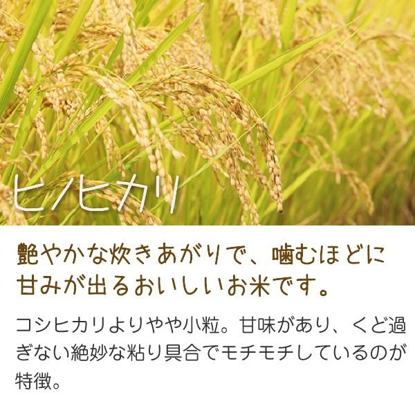 ヒノヒカリ(小川農園) 20kg 令和2年 滋賀県産 近江米 送料無料 - 道の駅草津 oumitokuichi 02