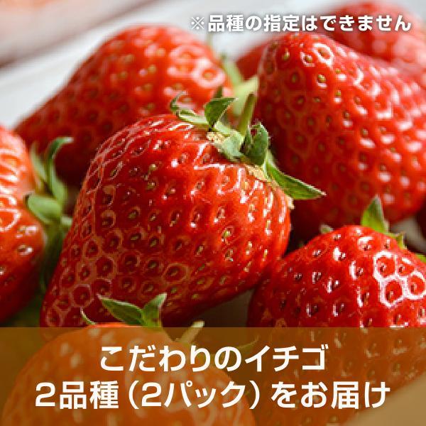 こだわりイチゴのバラエティーセット 滋賀県産 イチゴセット - 道の駅草津|oumitokuichi|02