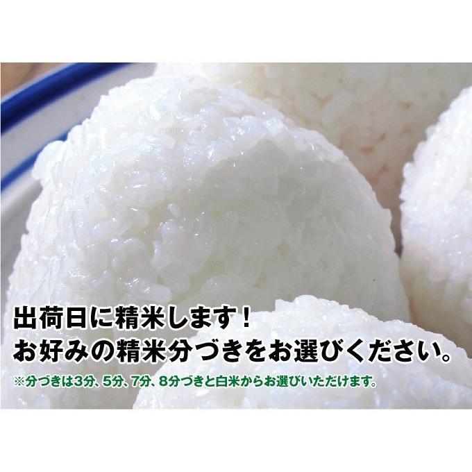 令和2年産 2kg精米 特別栽培米有機肥料 岐阜 飛騨下呂産 銀の朏(みかづき)   |owarinokomegura|05
