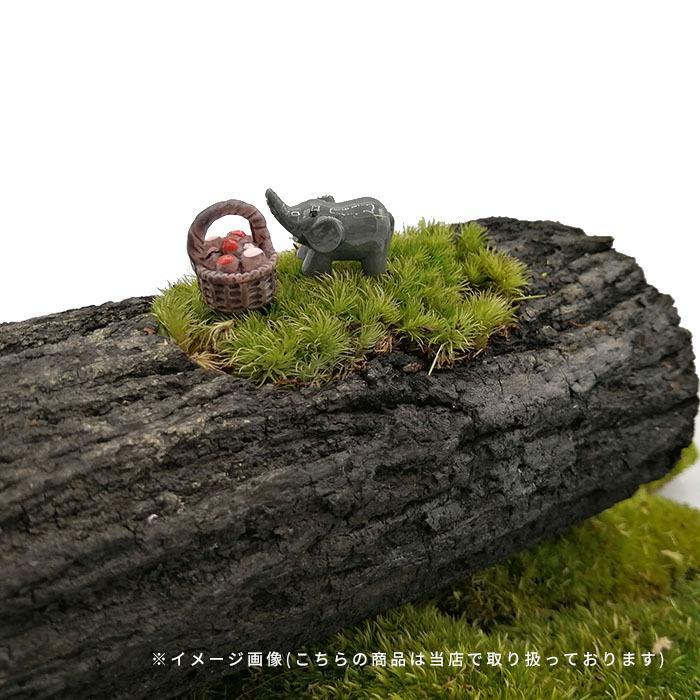 DIY ミニチュア きのこ 赤 黄 青 紫 緑 ピンク ドールハウス インテリア 樹脂 盆栽 箱庭 苔リウム テラリウム ガーデン 風景 装飾 小道具 DIY p-comfort 10