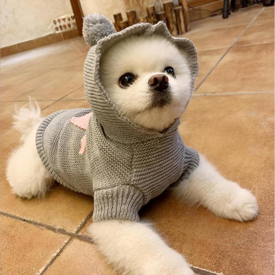 犬の服 犬服 セーター パーカー 編み 犬のニット かわいい ドッグウェア ドッグクローズ トイプードル チワワ ポメラニアン 小型犬 送料無料 メール便対応|panni-fashion|12