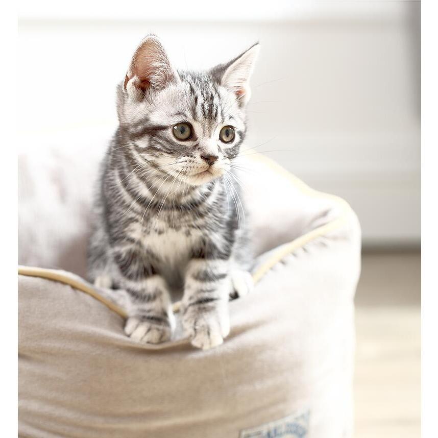 ペットベッド 猫ベッド 冬用 犬ベッド あったか ペット用 クッション 保温防寒 崩れにくい 小型犬 猫用ふわふわ 暖かい キャットハウス 34*34*23 送料無料|panni-fashion|15