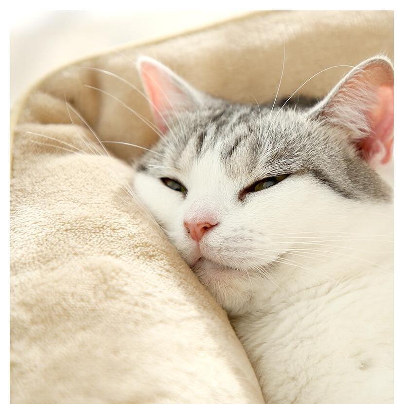 ペットベッド 猫ベッド 冬用 犬ベッド あったか ペット用 クッション 保温防寒 崩れにくい 小型犬 猫用ふわふわ 暖かい キャットハウス 34*34*23 送料無料|panni-fashion|05