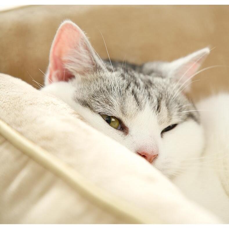 ペットベッド 猫ベッド 冬用 犬ベッド あったか ペット用 クッション 保温防寒 崩れにくい 小型犬 猫用ふわふわ 暖かい キャットハウス 34*34*23 送料無料|panni-fashion|08